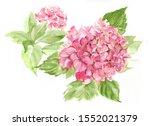 Pink Hydrangea Flowers...