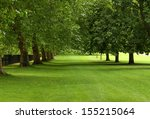 Parallel Rows Of Sycamore And...
