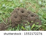 Anthill On A Background Of...