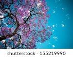 Jacaranda Tree Sky Purple...