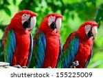The Beautiful Birds Greenwinged ...