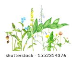 wild plants and flowers ...   Shutterstock . vector #1552354376
