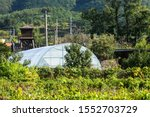 YeongCheon in south korea countryside landscape green house