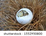 Stock photo africa spurred tortoise are born naturally tortoise hatching from egg cute portrait of baby 1552950800
