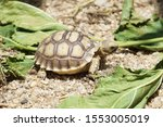 Stock photo close up african spurred tortoise resting in the garden slow life africa spurred tortoise 1553005019