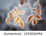 Leaves With Frost Ice Crystals...