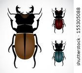 3 isolated,animal,background,beatle,beetle,black,brown,bugs,cartoon,closeup,collection,color,design,detail,fly
