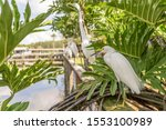 The Snowy Egret  A Small White...