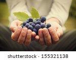 grapes harvest. farmers hands...   Shutterstock . vector #155321138