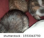 Stock photo three kittens who are sleeping 1553363750