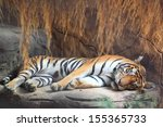 Big Tiger Sleeping
