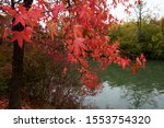 Red Maple Trees On Marne River...