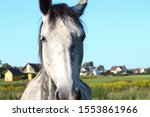 White Horse Standing In Field...