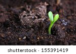 Small Green Seedling In The...