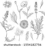 hand drawn botanical...   Shutterstock .eps vector #1554182756