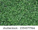 nature fresh green leaves plant ... | Shutterstock . vector #1554377966