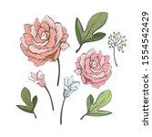 floral elements for design. set ... | Shutterstock .eps vector #1554542429