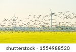 Birds Flying Over A Field With...