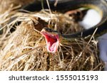 Common Garter Snake Slithering...