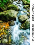 Forest River Stream Water With...