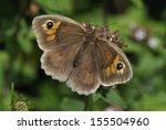 Meadow Brown Butterfly  ...
