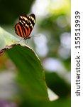 Delicate Tiger Mimic Queen ...