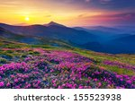 magic pink rhododendron flowers ... | Shutterstock . vector #155523938