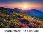 magic pink rhododendron flowers ... | Shutterstock . vector #155523980