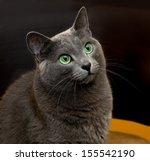 portrait of elegant russian... | Shutterstock . vector #155542190