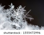 natural snowflakes on snow ... | Shutterstock . vector #1555472996