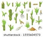 sugar cane cartoon vector... | Shutterstock .eps vector #1555604573