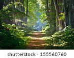 Road In A Beautiful Forest In...