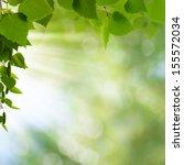 natural freshness. abstract... | Shutterstock . vector #155572034