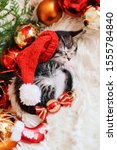 Stock photo kitten sleeps in christmas bright red decorations happy new year 1555784840