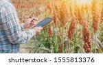 Farmer Using Tablet For...