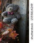 Abandoned  Left Behind Teddy...