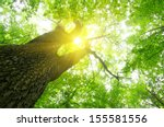 green forest  background in a... | Shutterstock . vector #155581556