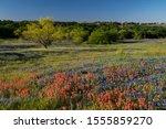 Bluebonnet Filled Meadow On Th...