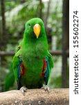 parrot bird sitting on the perch   Shutterstock . vector #155602274