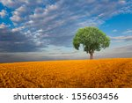 Beautiful Landscape And Lone...