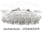 Rural Landscape Field Wheat ...