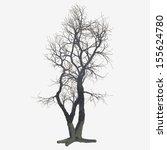 A Barren Winter Pear Tree.