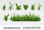 realistic green grass. 3d fresh ... | Shutterstock . vector #1556253743
