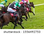Group Of Galloping Racehorses...