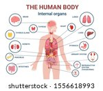 Human Body Internal Organs And...