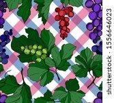 vector grape berry healthy food....   Shutterstock .eps vector #1556646023