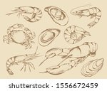 seafood set  food collection in ... | Shutterstock . vector #1556672459