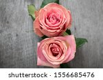 Two Pink Roses In A Rustic...