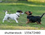 Stock photo two little dog meeting in park 155672480