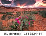 Sun Beams And Cactus Flowers I...